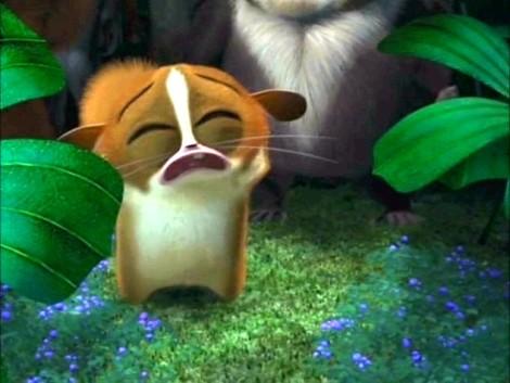 Madagascar_Mort021