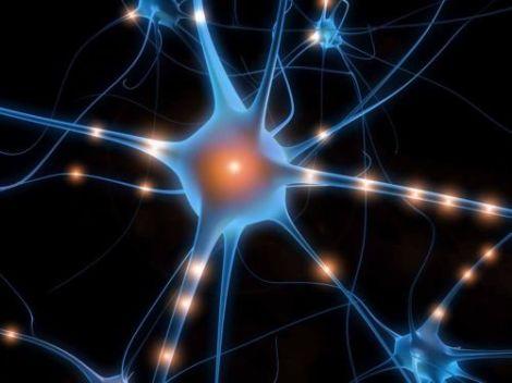 neurone-rigenerazione-cervello